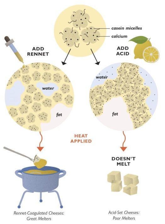 science_20_parmesan-coagulation-752x1024